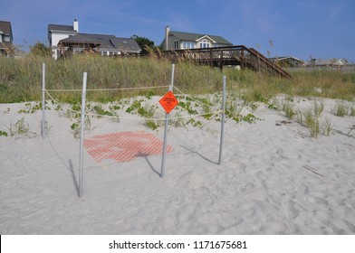 A loggerhead Turtle nest on the beach is protected from predators and humans.