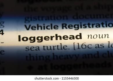 loggerhead word in a dictionary. loggerhead concept.