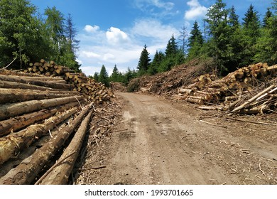 Logging companies as the modern lumberjacks restrict the passage on bike path of cyclists when logging in Czech Republic