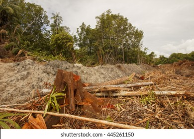 Logging deforestation environmental problem