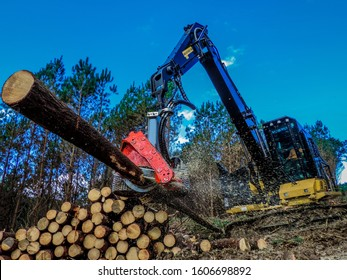 Logging Equipment in Action at the Forest