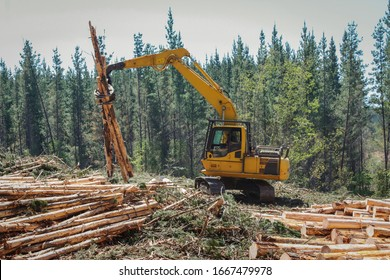 Logging  Equipment Forestry Industry Machine
