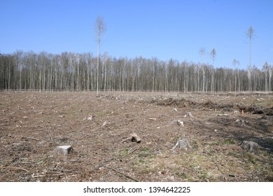 Logging in a floodplain forest