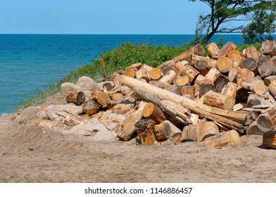 logging on the coast, deforestation, felled trees