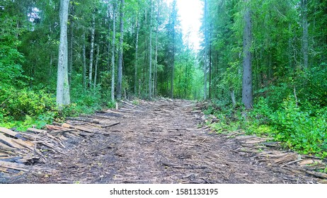 Logging road in a swampy wooded area lined with waste from sawmill (plank road).