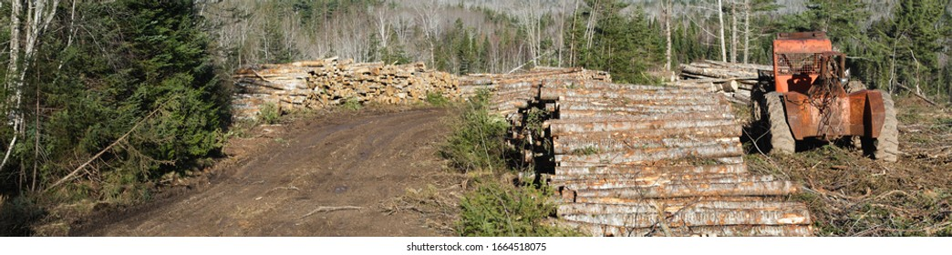 Logging Skidder parked in forest clearing. Wide format image.
