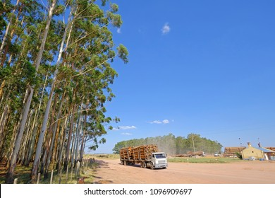 Logging truck with eucalyptus log for the paper or timber industry, Uruguay, South America. This kind of monoculture also takes place in Argentina, Chile and Brazil.