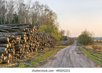 Logging. Wood stockpile. Kaluga region, Russia