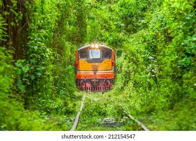 Logistic Train running on Natural Train tree tunnel in Thailand (Bangkok)