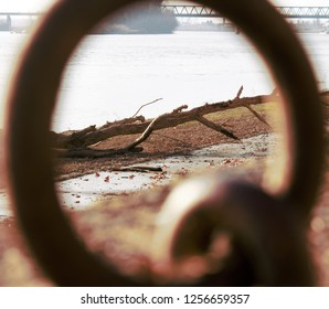 logs alluved on riverbank
