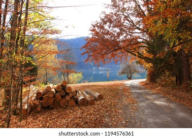 Logs beside road in alpine forest