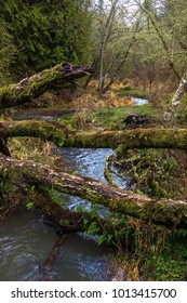 Logs and Creek