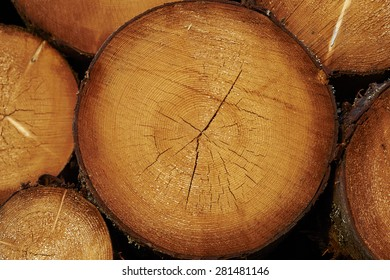 Log's crosscuts on the timber cutting