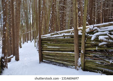 Logs in the forest covered with snow in winter