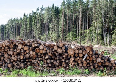 Logs lie on the ground. Cut down forest. Preparation of forest removal. Siberian forests destroy illegal logging. A pile of logs.