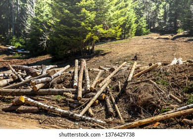 Logs in the meadow.Concept.-destruction of nature.Image