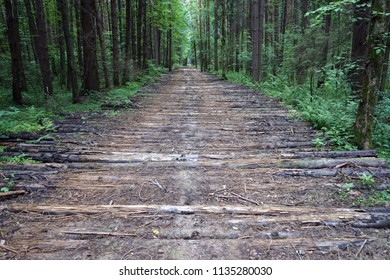 Logs on the dirt road in the forest