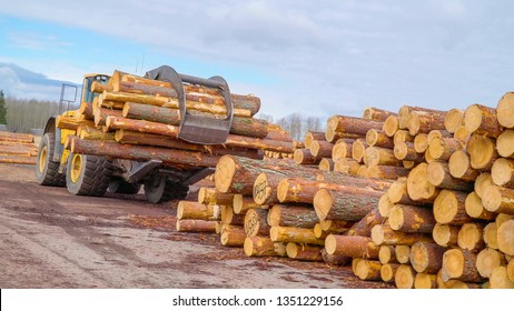 The logs on the grapple of the forest truck cut from the pine trees in the forest in the saw mill