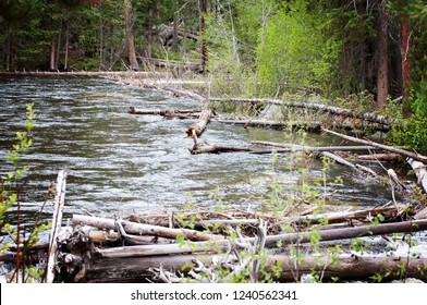 Logs in River