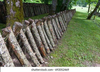 Logs for shiitake mushroom growing.