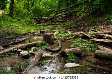 Logs in a small stream in a ravine