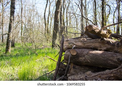 Logs in spring forest