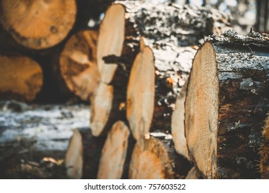 logs of trees in the forest after felling. felled tree trunks. Logging. Selective focus on photo