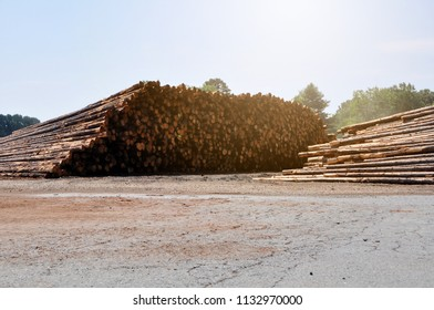 Logs wait to be transported away from the processing site.