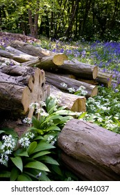 Logs with wild garlic and bluebells
