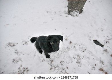 Lola, a black puppy in the snow looking up