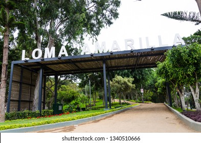 Loma Amarilla an ecosystem with more than 4,000 square meters of pure air. Habitat of 34 species of birds and 25 types of trees, considered one of the last ecological lungs of Lima.