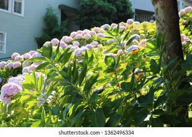 lombard st flowers