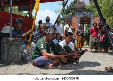 LOMBOK/INDONESIA-OCTOBER 27 2012: Some men are carrying out the Tabuh Rah religious ceremony or cockfighting, using rooster as a means of offering