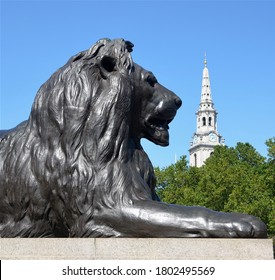 LONDON - AUGUST 7, 2020. One of four lion sculptures by Sir Edwin Landseer at the foot of Nelson's Column erected 1867 in Trafalgar Square and St Martin-in-the-Fields church beyond in London, UK.