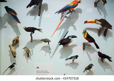 LONDON - AUGUST 7: Natural History Museum stuffed South American rainforest birds collection on August 7, 2015 in London, UK. The museum hosts a vast range of specimens.