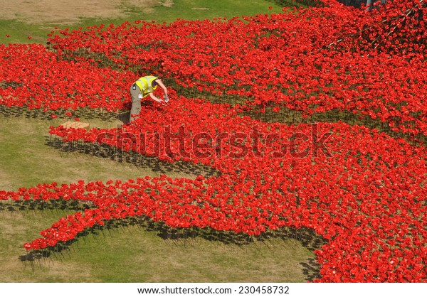 LONDON - AUGUST 7. A volunteer helps to install ceramic poppies on August 7, 2014 commemorating the 888,246 First World War British and Commonwealth military deaths, located at the Tower of London.
