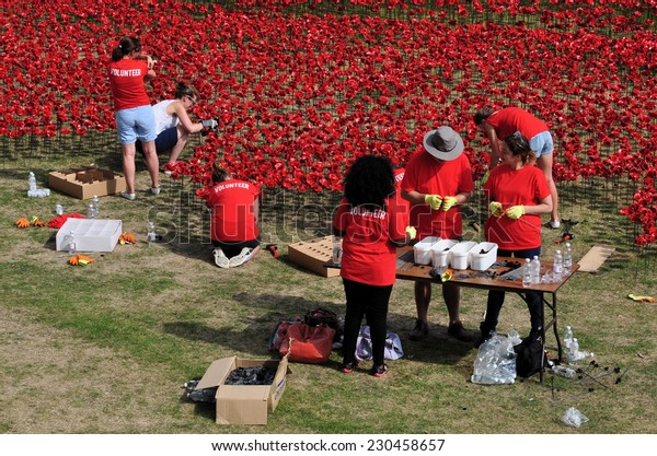 LONDON - AUGUST 7. Volunteers assemble and install 888,246 ceramic poppies on August 7, 2014, one for each 1914-18 First World War British and Commonwealth military death, at the Tower of London.