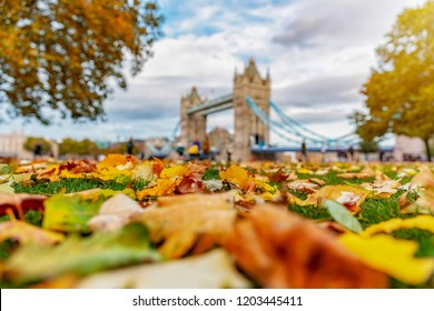 London in autumn time: view to the Tower Bridge with colourful autumn leaves in front