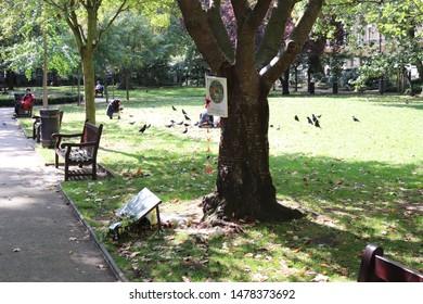 London, England, August 13th 2019: Hiroshima Peace Tree in Tavistock Gardens, Bloomsbury, London