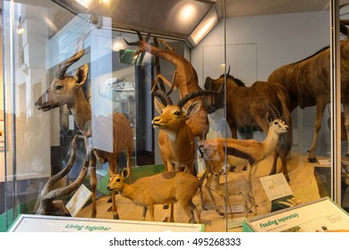 LONDON, ENGLAND - JUL 23, 2016: Zoological part of the Natural History Museum (1881), Exhibition Road, South Kensington