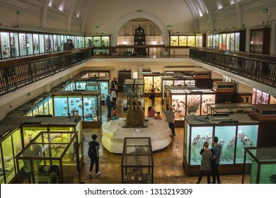 London, England - October 2018 : Interior Hall with exhibits in the Horniman Museum in Forest Hill, London.