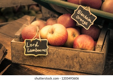 London, England - September 30th 2018: Warm & Hazy Images of Lord Lambourne & Blenheim Orange English Variety Apples on display at Harvest Festival