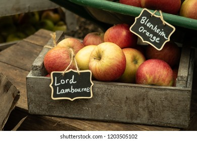 London, England - September 30th 2018: Lord Lambourne & Blenheim Orange English Variety Apples on display at Harvest Festival.