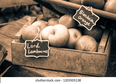 London, England - September 30th 2018: Split-Tone images of Lord Lambourne & Blenheim Orange English Variety Apples on display at Harvest Festival.