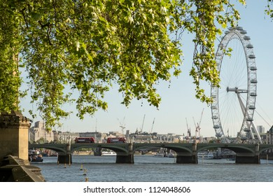 London, Greater London / United Kingdom - May 12 2018: Sunrise with clear sky over Thames and the London Eye seen from the Parliament park unde a green tree