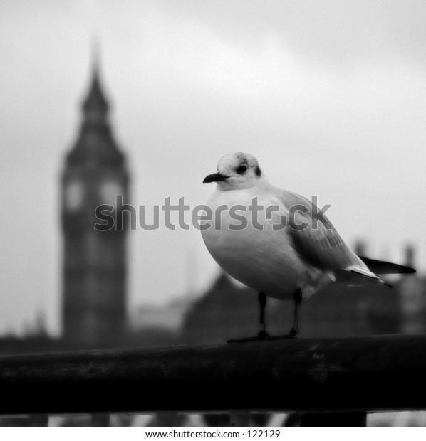 London gull