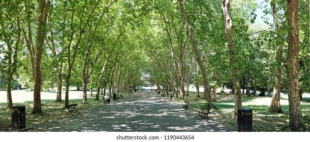 LONDON - JUNE 27, 2018: Panoramic view of tree tunnel through Crystal Palace Park in Crystal Palace, London. The Park is a Grade II listed historic Victorian Park.