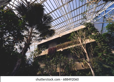 LONDON, MARCH 2016: The tall trees of Barbican Conservatory viewed against the glass roof