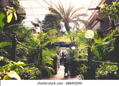 LONDON, MARCH 2016: A visitor walking through the main atrium of Barbican Conservatory which is bathed in bright sunlight