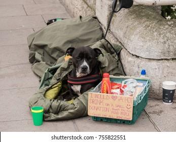 London, November 2017. A beggars dog next to a written sign requesting a donation. Taken on Blackfriars Bridge.